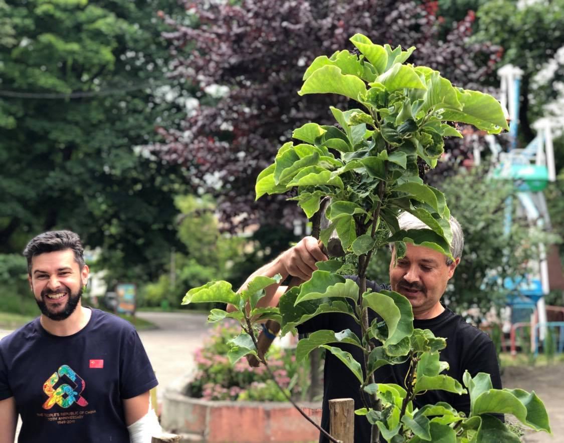 Вберегти: У Парку посадили 5 нових дерев і рятують сакуру з тополею